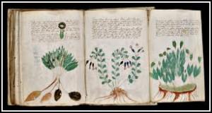 Le manuscrit le plus mystérieux du monde dans dame blanche le-manuscrit-le-plus-mystérieux-du-monde-300x160